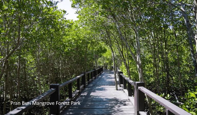 Pran Buri Mangrove Forest